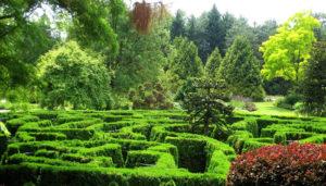 VanDusen Botanical Garden maze