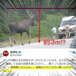 ムース 大きさ