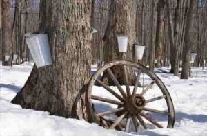 maple-syrup-