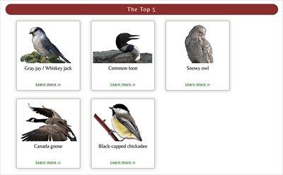 カナダ 象徴 鳥